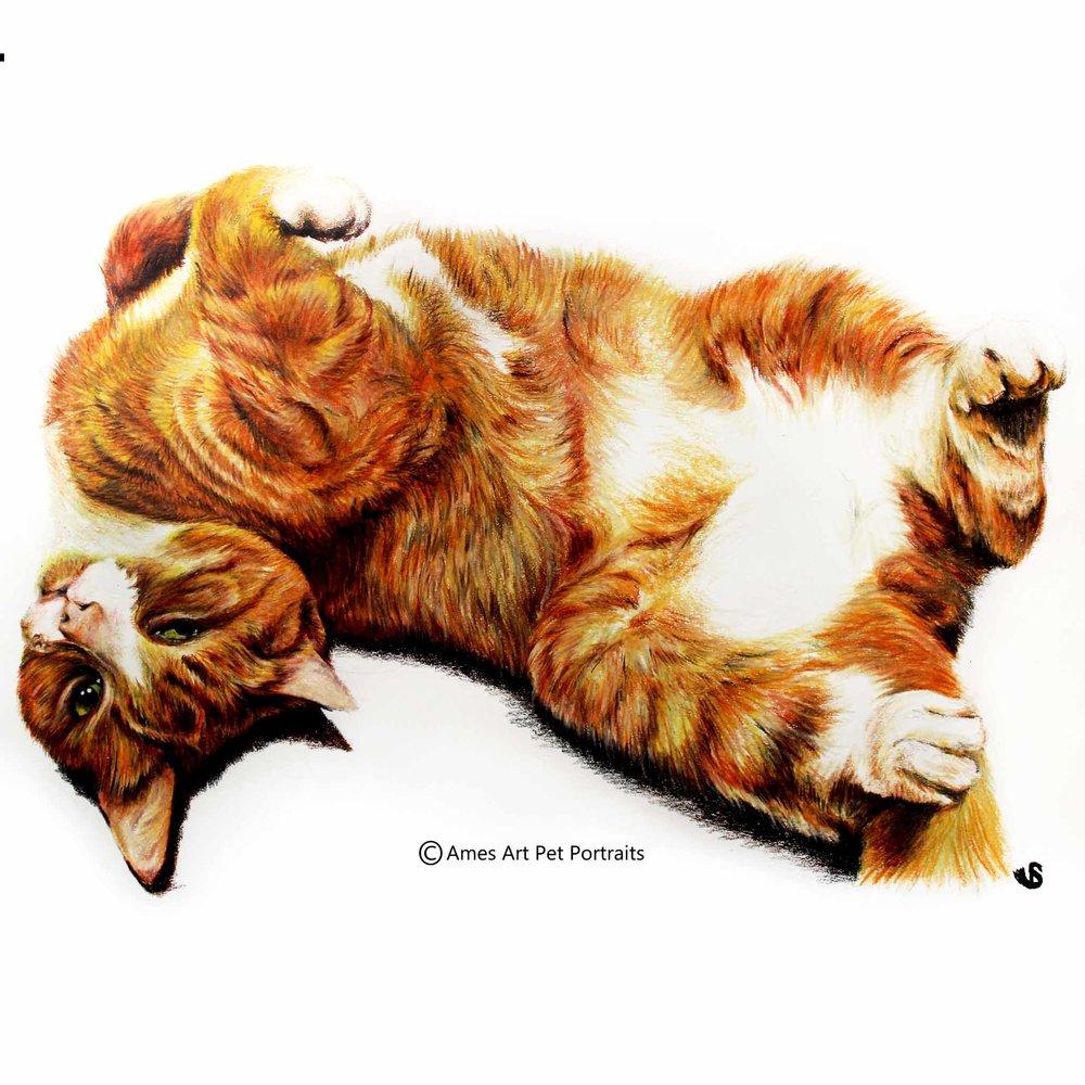 Ginger Tabby Cat colour pencil portrait in bristol uk by sema martin pet portrait artist