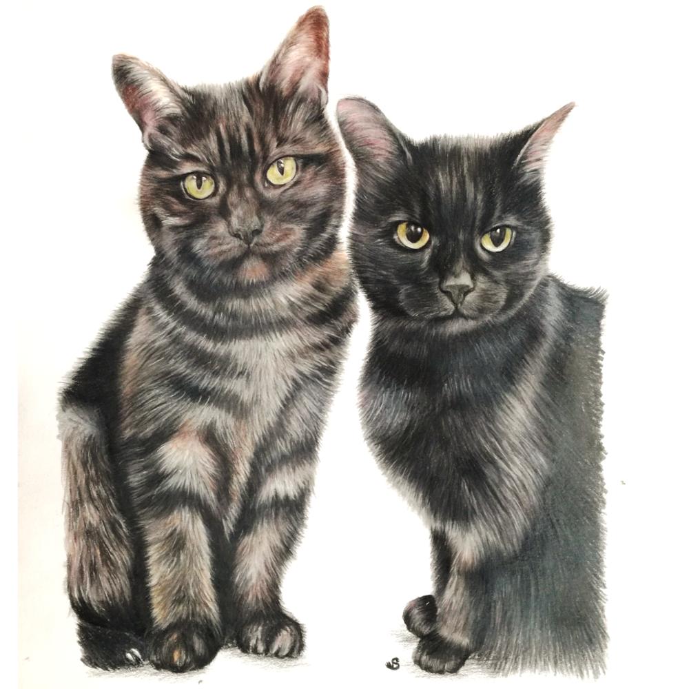 tabby and black cat colour pencil portrait in bristol uk by artist sema martin pet portrait artist