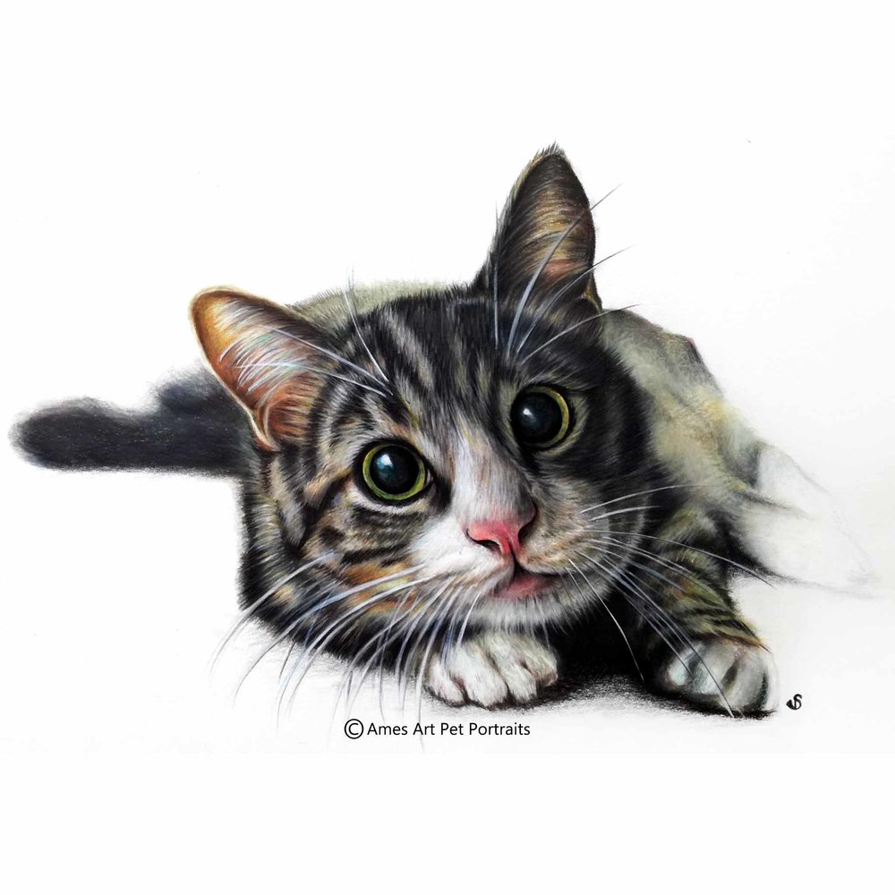 Tabby Cat Portrait in Reading, UK, Wall Print, Realism Fine Art, Cat lover gift, Gifts for her, Wall art print, Birthday gifts, Cat art, Gift cat décor