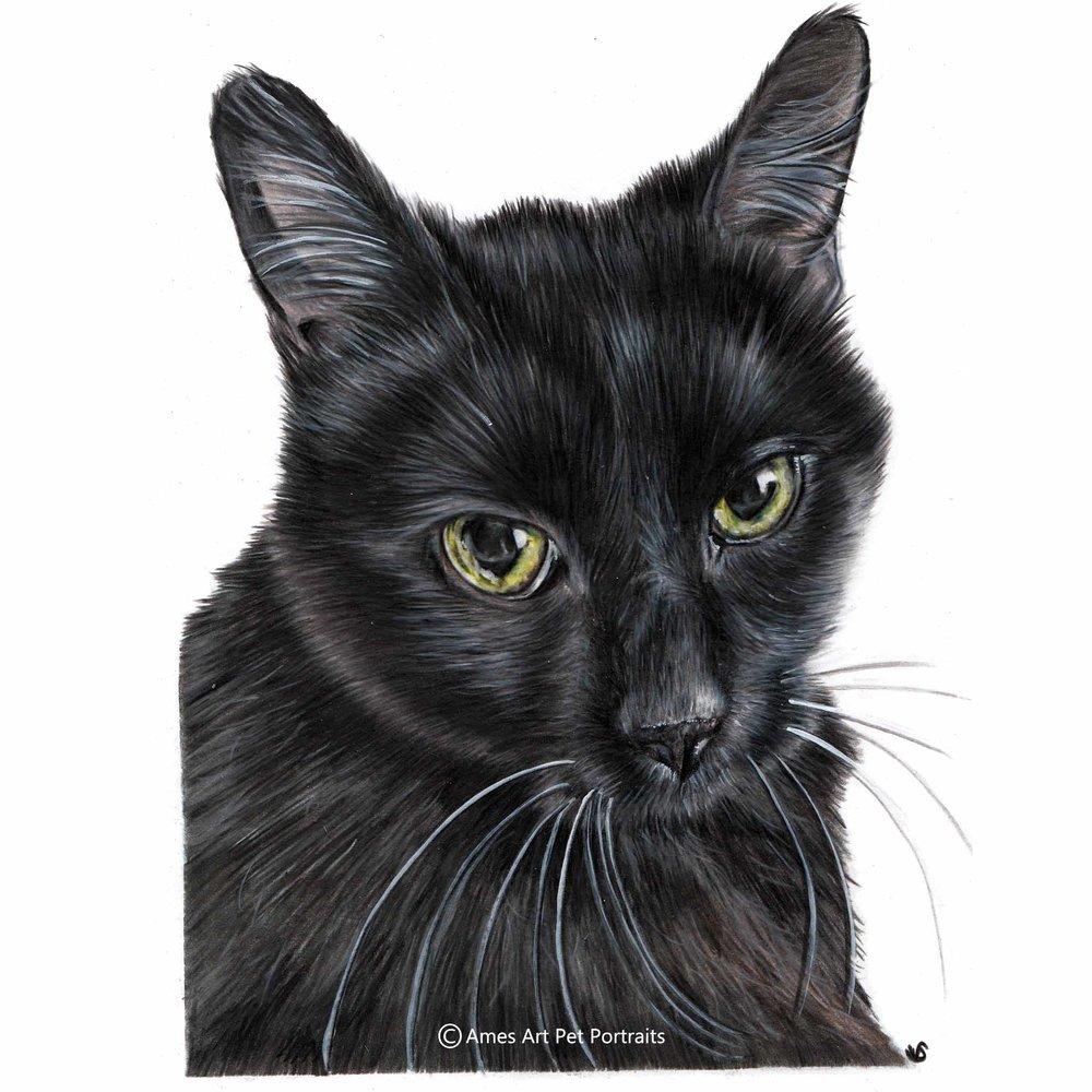 Belle Black Cat.jpg