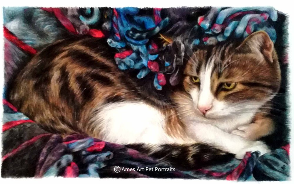 color pencil cat portrait of cat in a blanket by sema martin from utah usa
