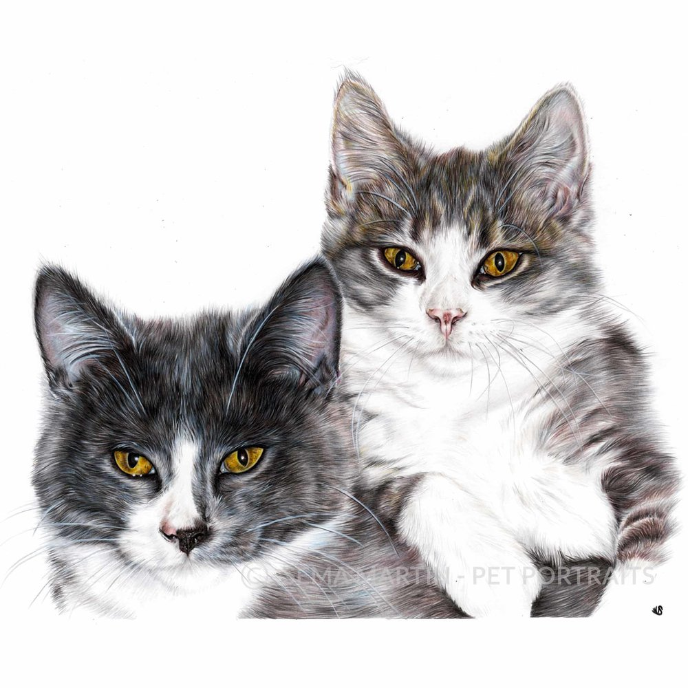 'Ollie & Charlie' - AUS, 16.5 x 11.7 inches, 2018, colour pencil cats cuddling portrait