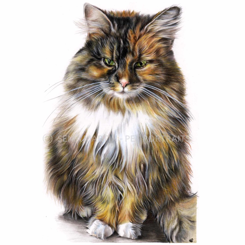 'Chanel' - UK, 8.3 x 11.7 inches, 2018, Colour Pencil Cat Portrait by Sema Martin