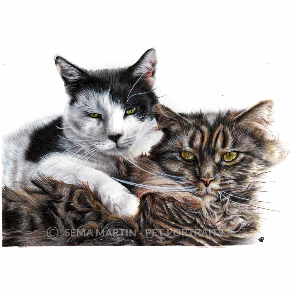 'Phantom & Gabrielle' - USA, 8.3 x 11.7 inches, 2018, Colored Pencil Cat Portrait
