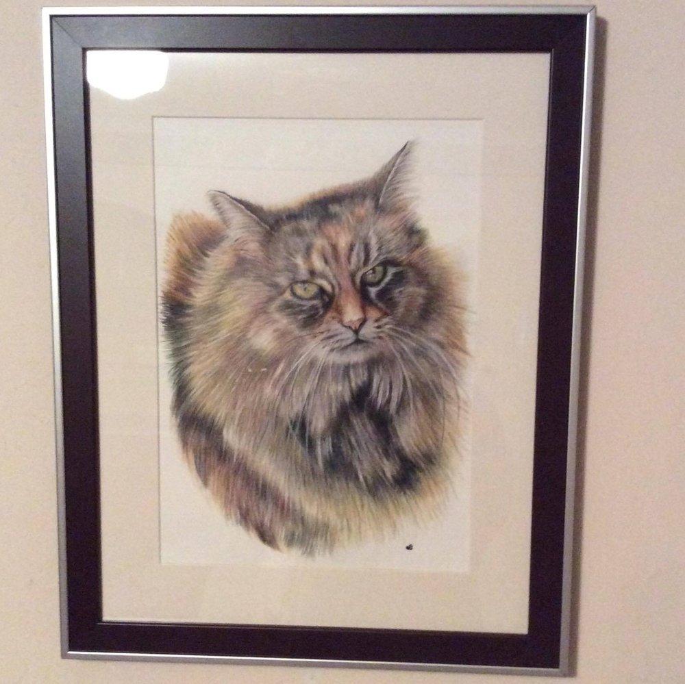 Belle Pet Portrait