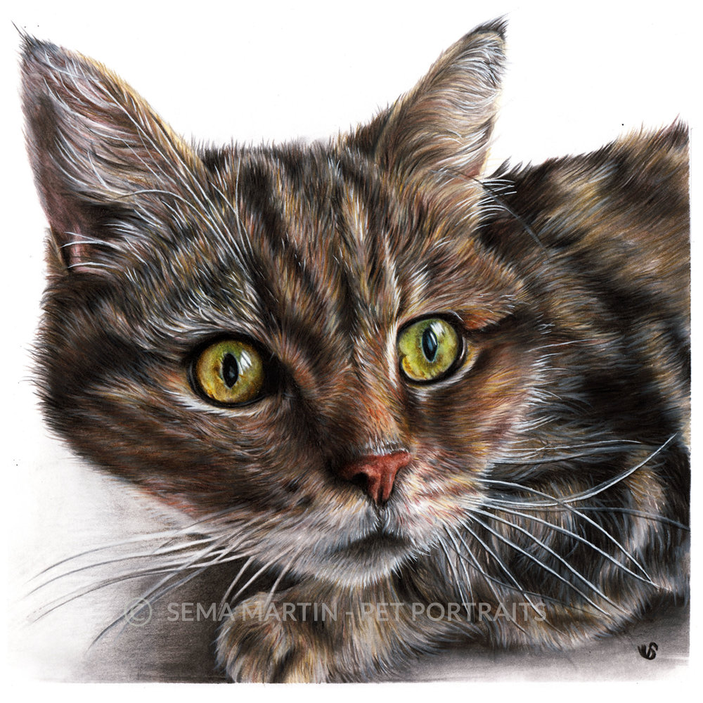 'Benny' - UK, 8.3 x 11.7 inches, 2018, Colour Pencil Cat Portrait by Sema Martin