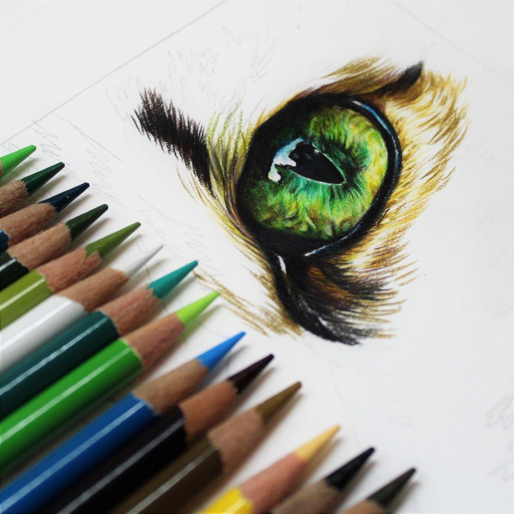 Arteza Art Supply testing, cat eye study, sema martin pet portrait artist