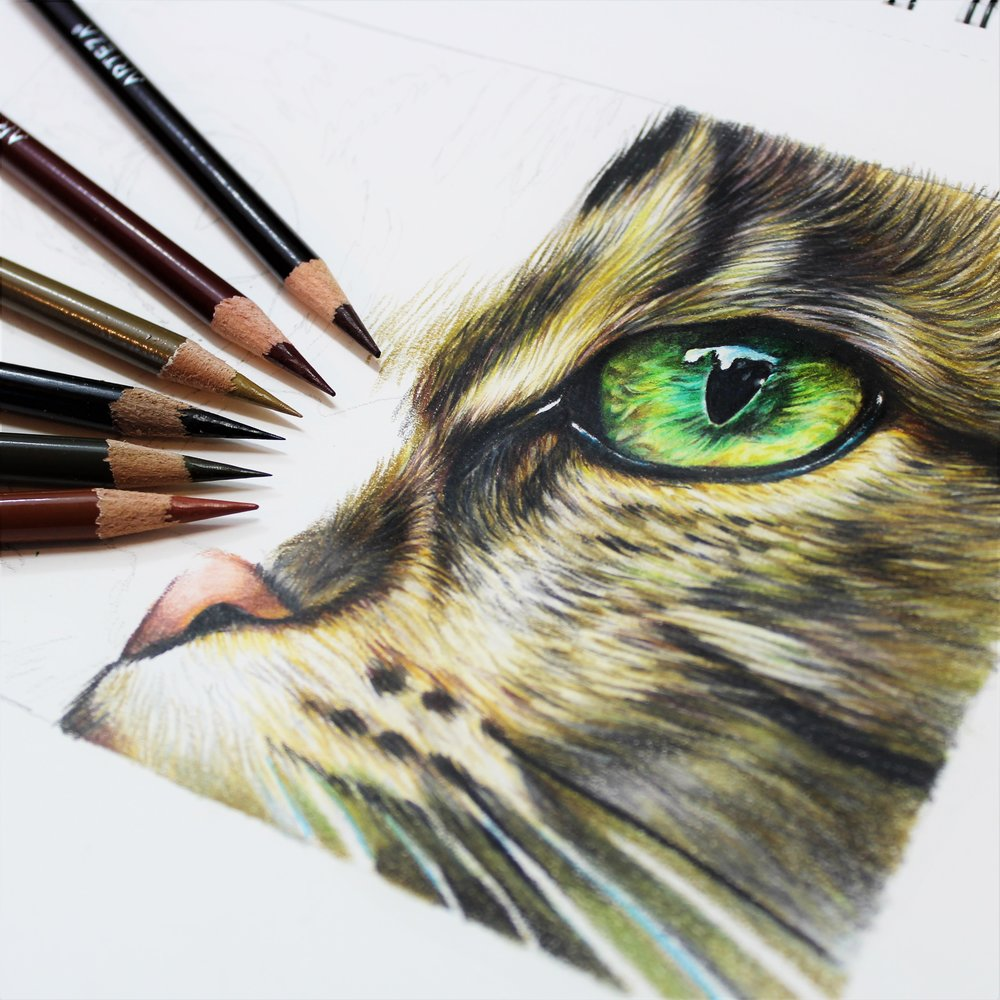 Arteza art supplies, cat eye study, sema martin pet portrait artist