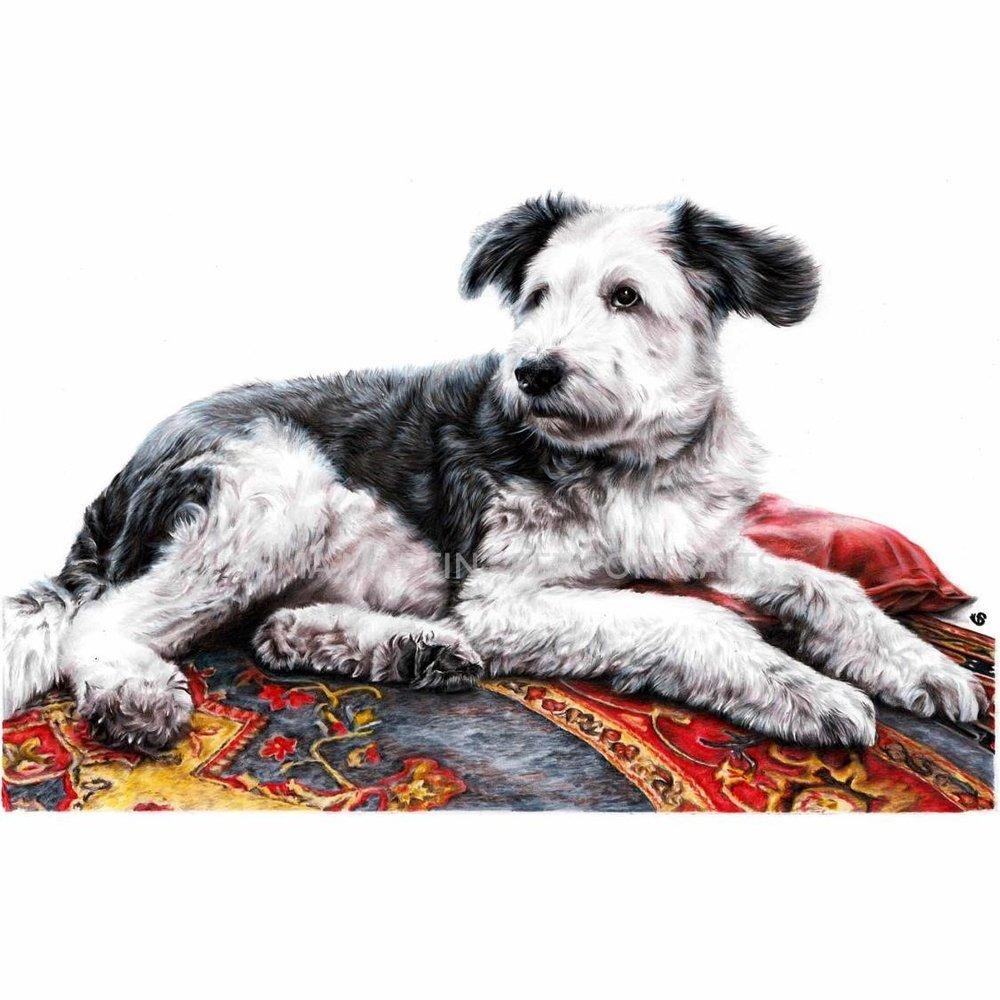 'Oscar' - UK, 16.5 x 11.7 inches, 2018, Colour Pencil Old English SheepDog Portrait by Sema Martin
