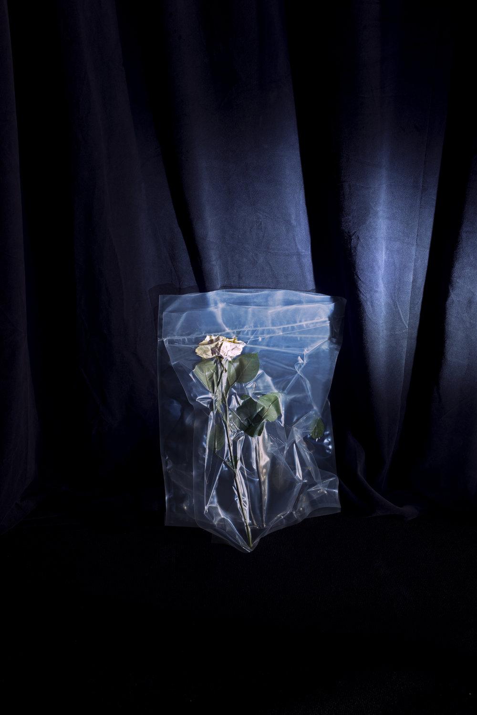 (4) Roses