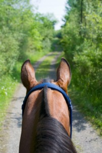 View from Horseback