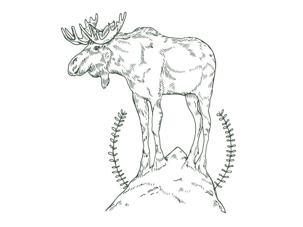 Pooja Moose-01.jpg