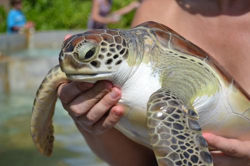 Cayman Turtle Farm (Cayman Islands)