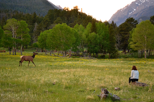 Taylor and the elk in Rocky Mountain National Park