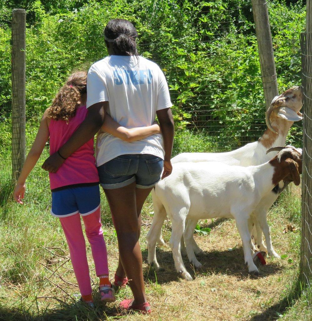 Dream Camper hugs Lucretia, goats.JPG