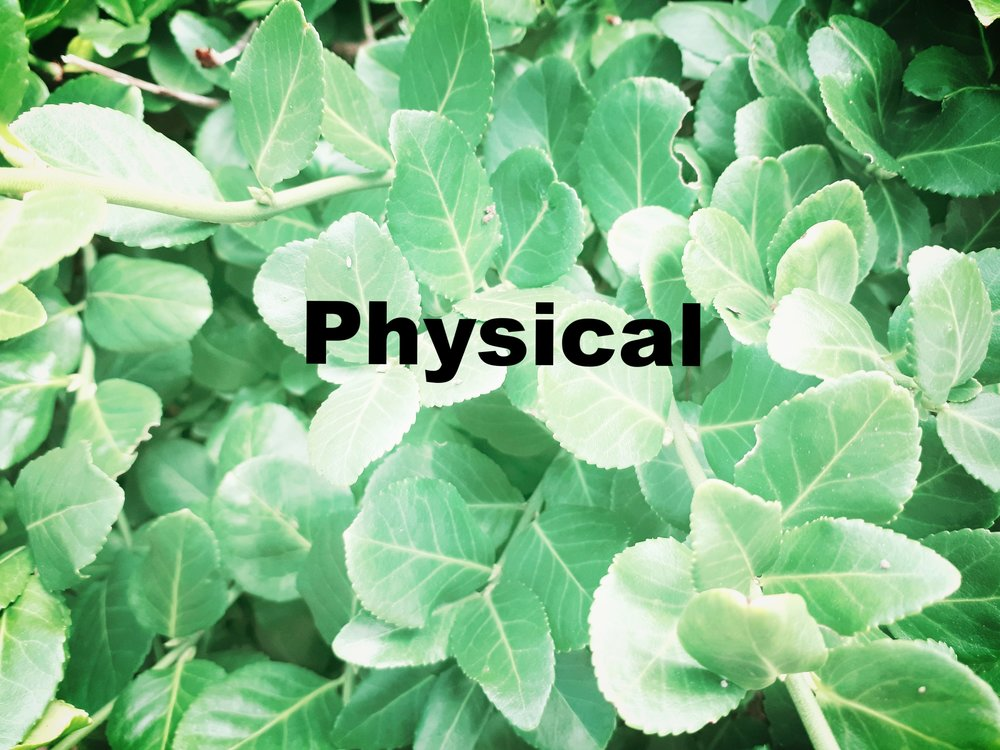 plantpic4.jpg