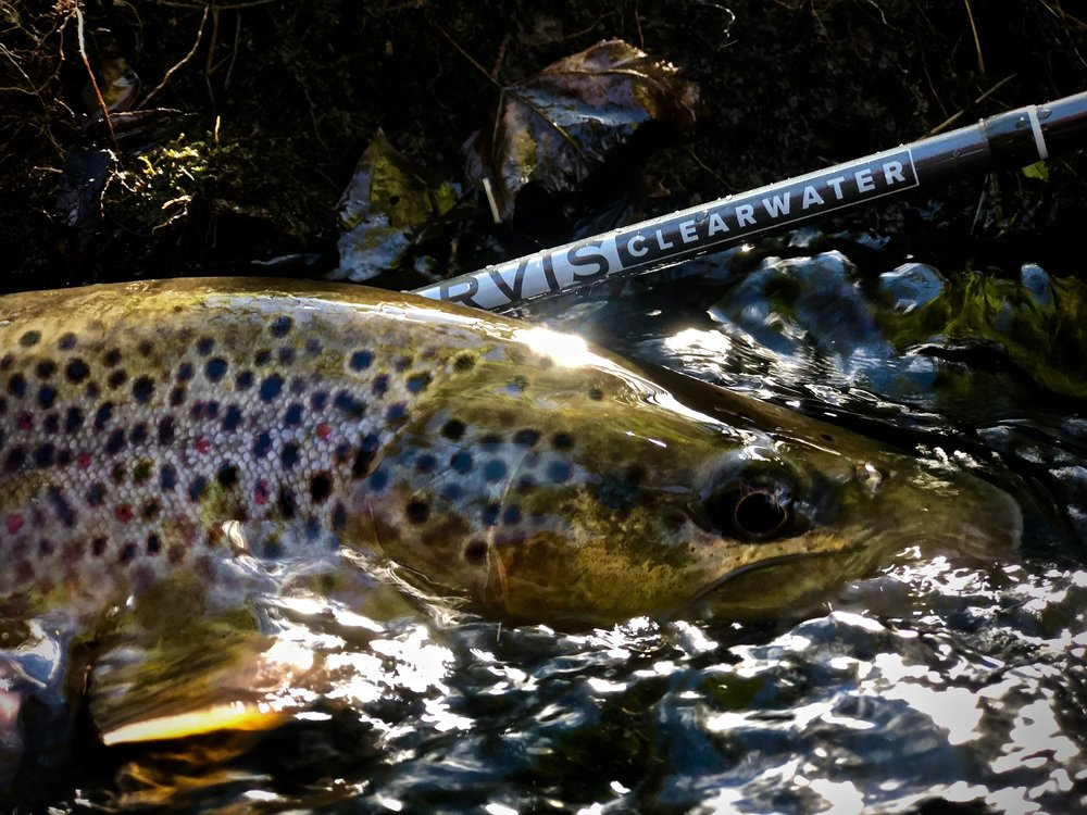 A Heavy Central PA Brown Trout Landed With A New (Coming Soon) Nymphing Rod