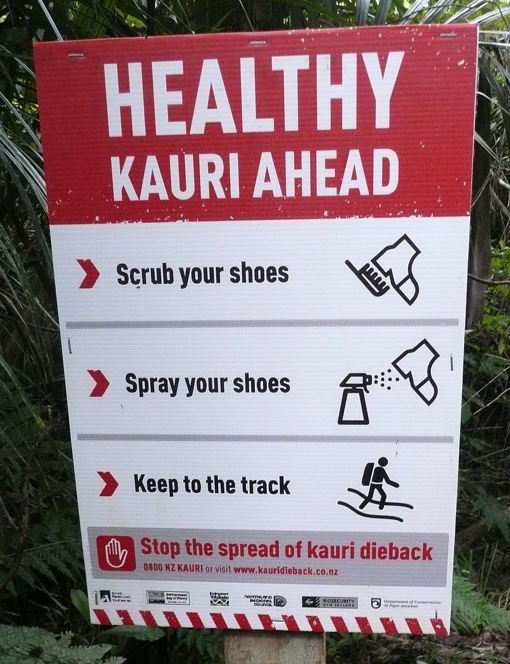 1024px-Kauri_dieback_sign.jpg