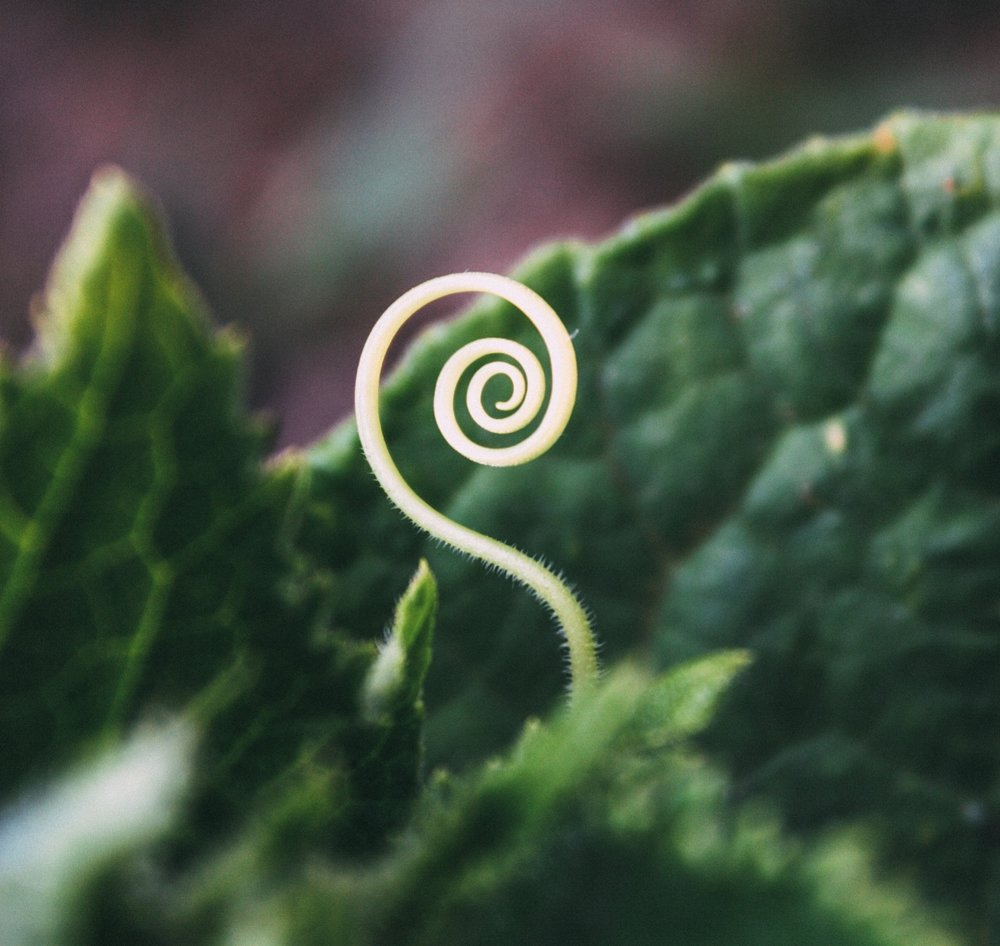 emerging sprout.jpg