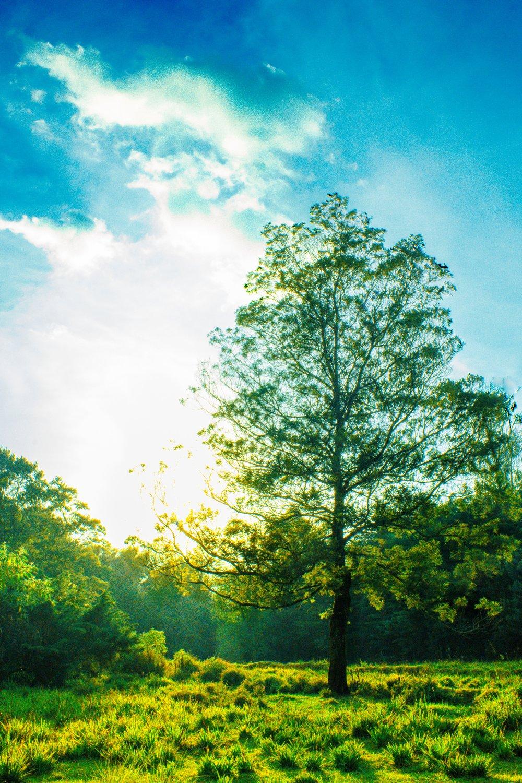 sanjeevan-satheeskumar-green tree in grass.jpg