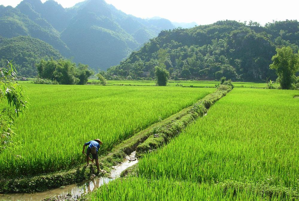 nre-farming-1.jpg