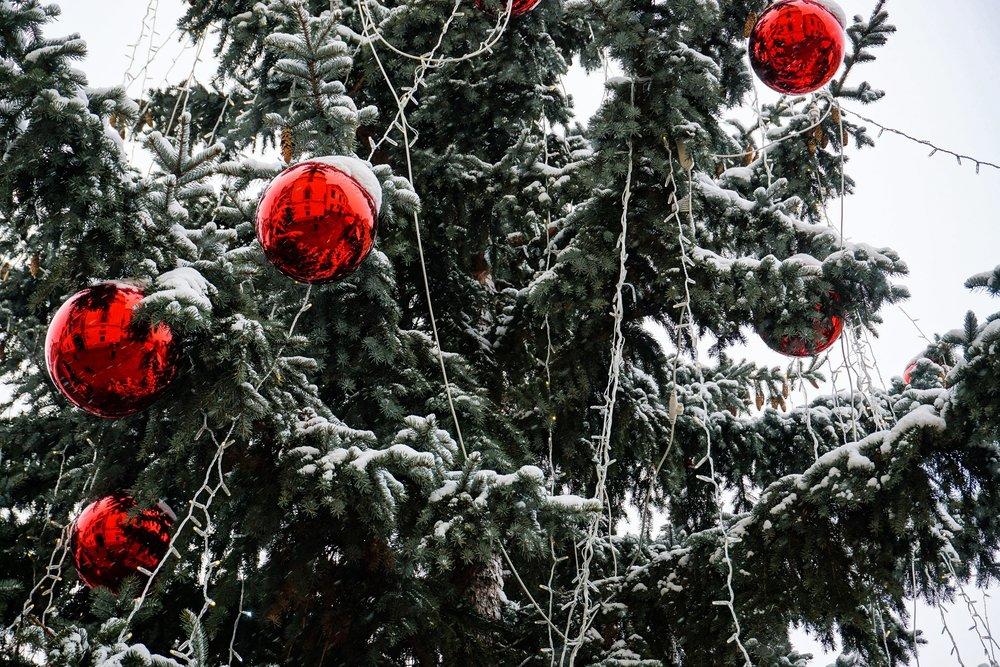 bratislava_christmast markets_tree.jpeg