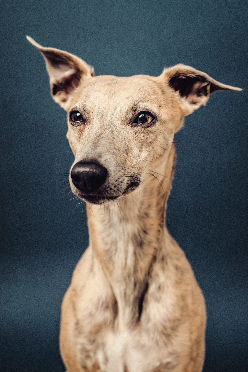 The_Dogs_By_Alex_Kitty_Alex_Wallace_Photography_073.jpg