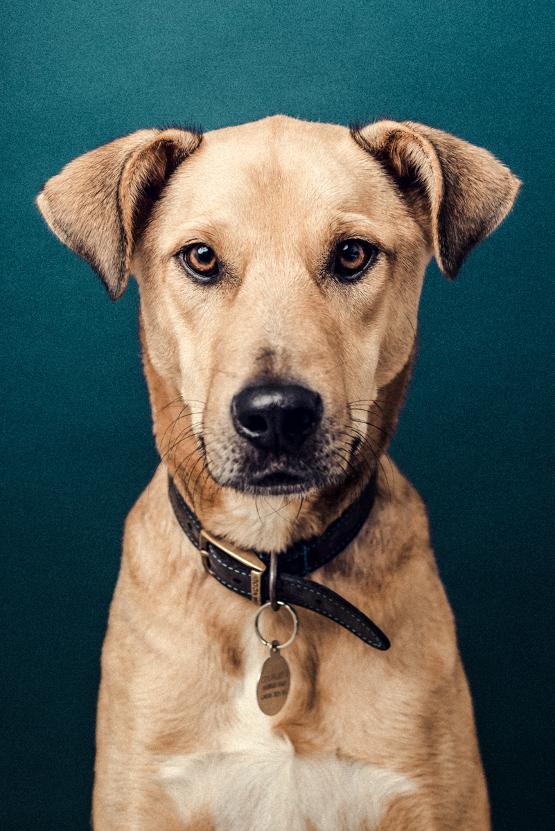 The_Dogs_By_Alex_Alex_Wallace_Photography_180.jpg