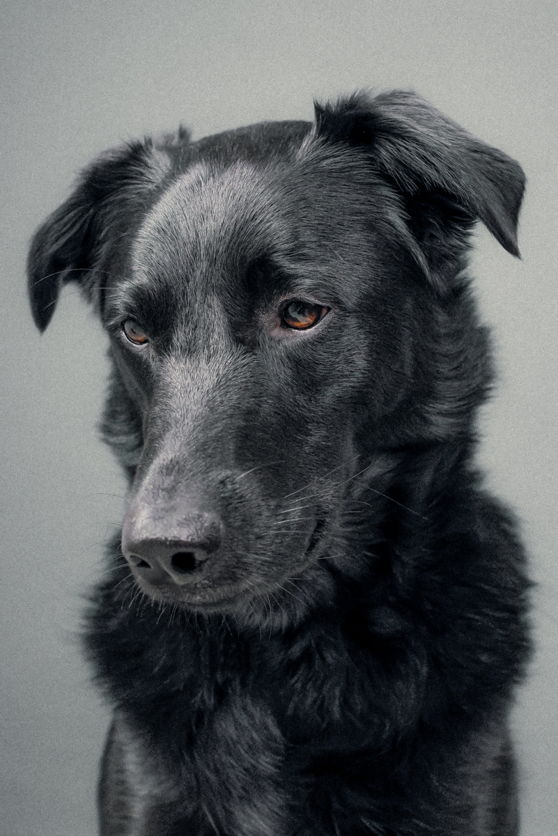 The_Dogs_By_Alex_Alex_Wallace_Photography_114.jpg