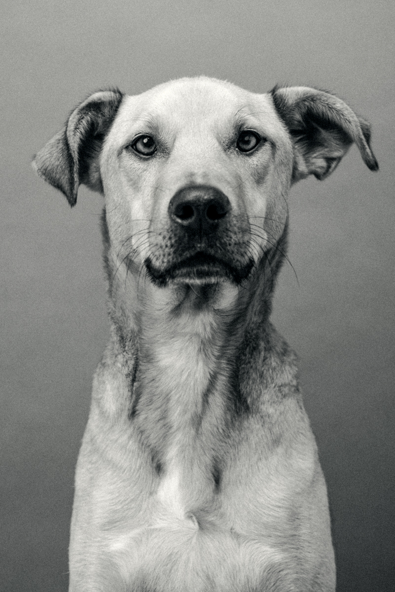 TheDogsByAlex_Alex_Wallace_Photography_000-15.jpg
