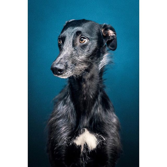 Free spring shoot giveaway! Who'd have thunk it!? I did. Here's how to get your basic package free of charge at my London studio - follow this page, like this post, tag three friends who have dogs. Easy right. Winning owner announced Sunday. Go! - - - - - - - #giveaway #photooftheday #dog #dogs #dogportrait #dogphotographerlondon #dogsofinstagram #portrait #tagafriend #london