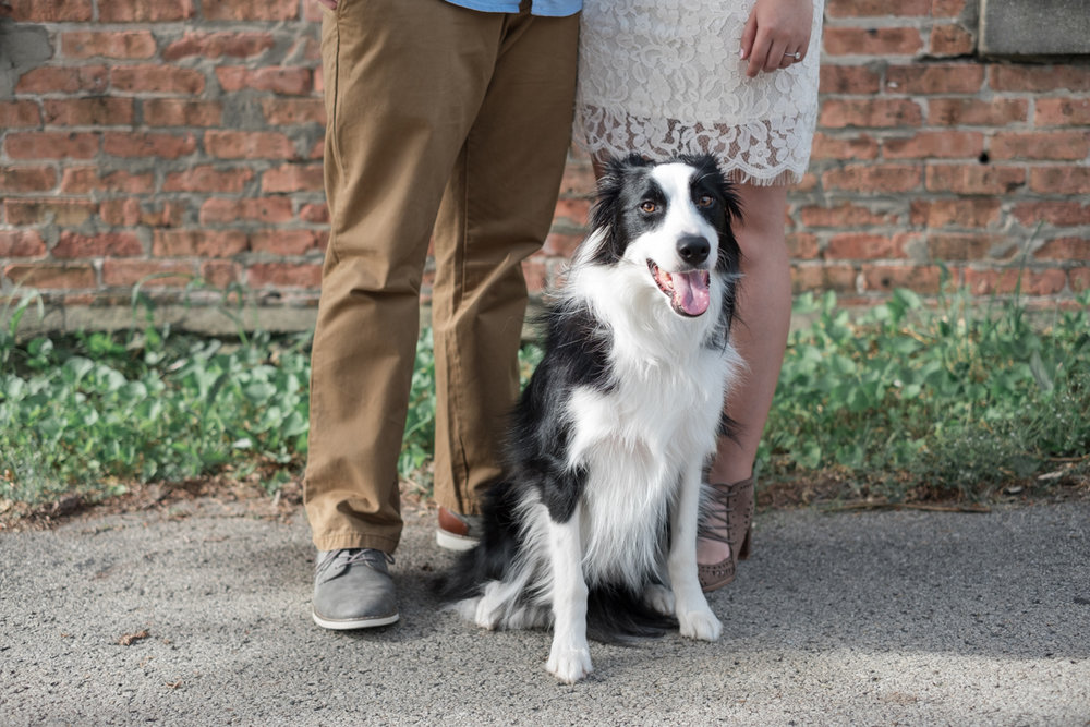 couples doggy takes part in their engagement photos