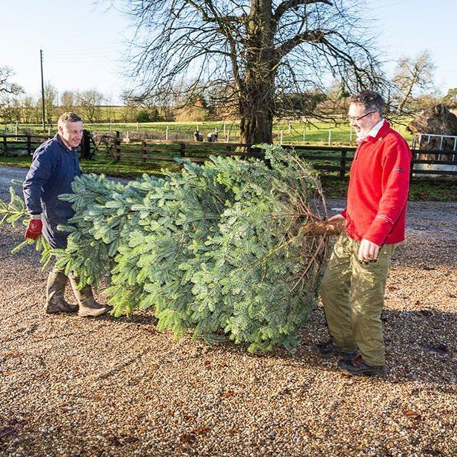 It's officially Christmas! which means Nick's delivering our #sustainable #ethicallygrown #XmasTree from a sustainable & local forest. Now to get the decorations out! #MerryChristmas