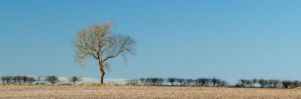 Lincolnshire Wolds landscape