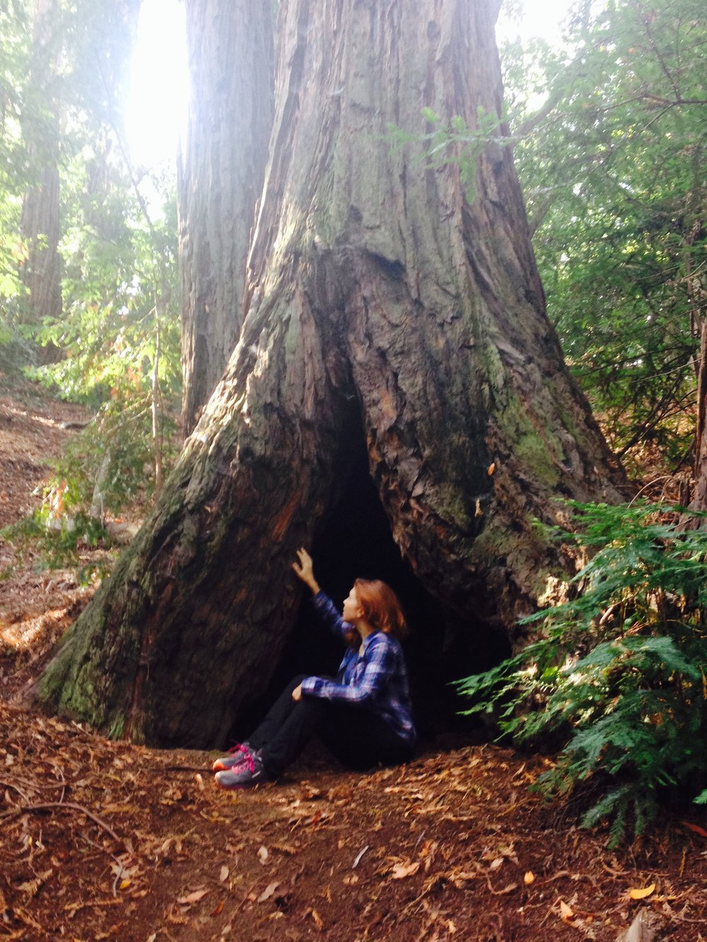 Fascinated by a redwood.