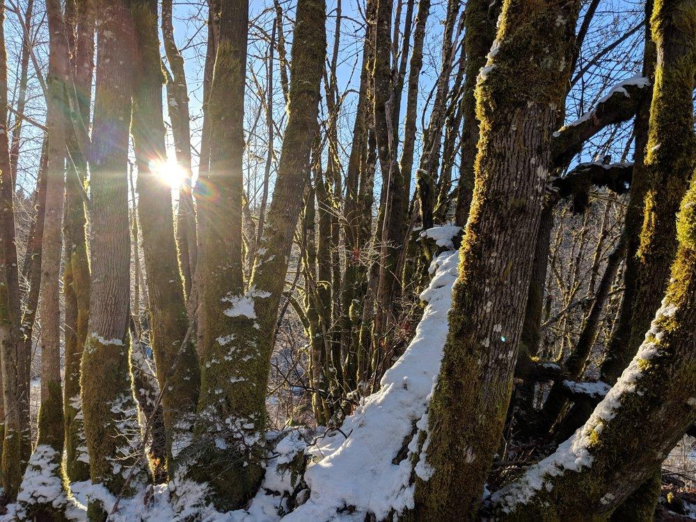 Cumberland woods feb 2019.jpg