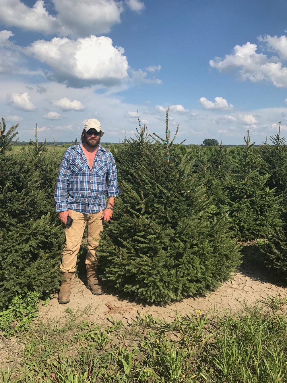 picea abies 5ft.jpg