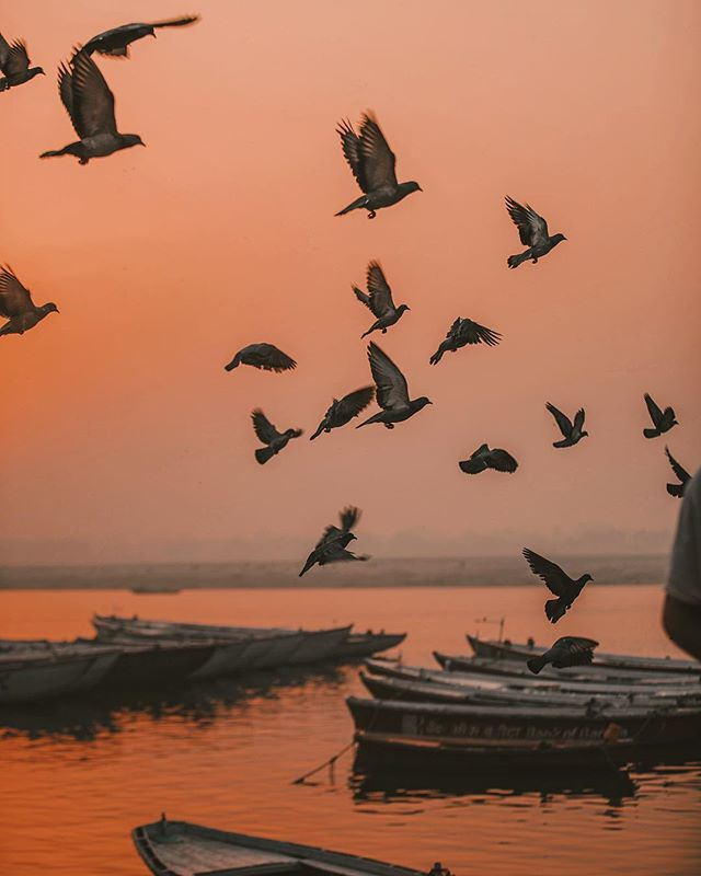 🎵 Birds flying high, you know how I feel. 🎶 The sunrise in Varanasi is truly one of the most beautiful. And yes, those birds were actually there flying across the frame, they were not edited in. 😊 // 📸: @arnelle // #Varanasi, #India #thisisindia #sunrise #visitindia #travelphotography #travel #sunriseporn #incredibleindia #ganges #gangesriver #goodtravels #grouptravel