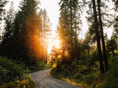 WHY IS SUNLIGHT SO IMPORTANT? -