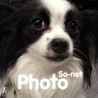 so-netphoto_thum.jpg