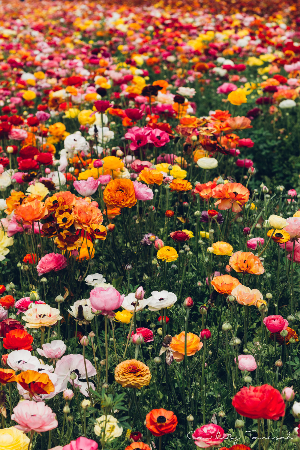 FlowerField_47.jpg