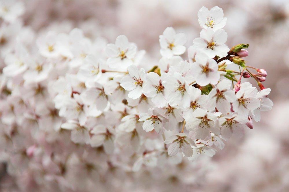 bloom-2525_1920.jpg