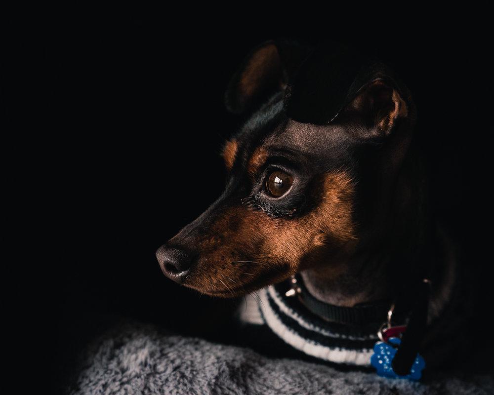 DogGlam1080.jpg