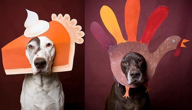 Just as a reminder we will be closed on November 22nd for Thanksgiving. We will re-open on the 23rd! 🦃  #frontierveterinaryclinic  #SwartzCreek
