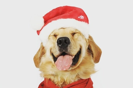 Just a friendly reminder that we are closed the 24th & 25th of December for the holiday. We will re-open on the 26th! Happy Holidays🎄  #frontierveterinaryclinic #SwartzCreek