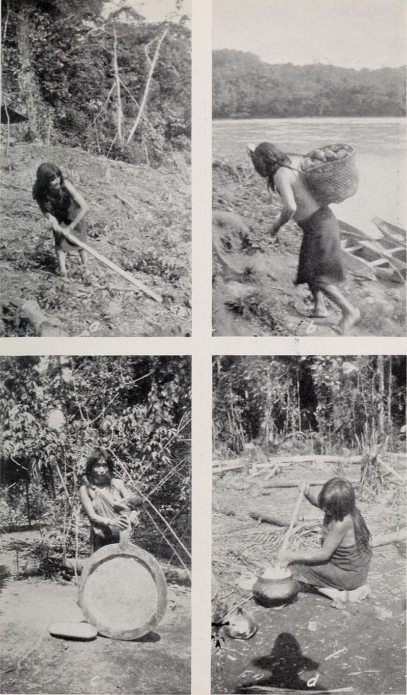 Amazonian women preparing manioc beer . Ca. 1901. By Smithsonian Institution. Bureau of American Ethnology - https://www.flickr.com/photos/internetarchivebookimages/19799573794/