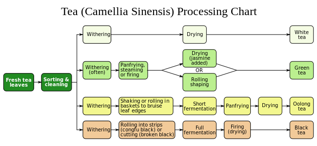 Figure 3: Processing sequences for Green, White, Oolong and Black teas.