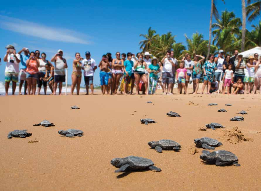 Hatchlings return to sea as part of environmental awareness activities with local communities. © PROJETO TAMAR / FUNDAÇÃO PRO TAMAR BRASIL