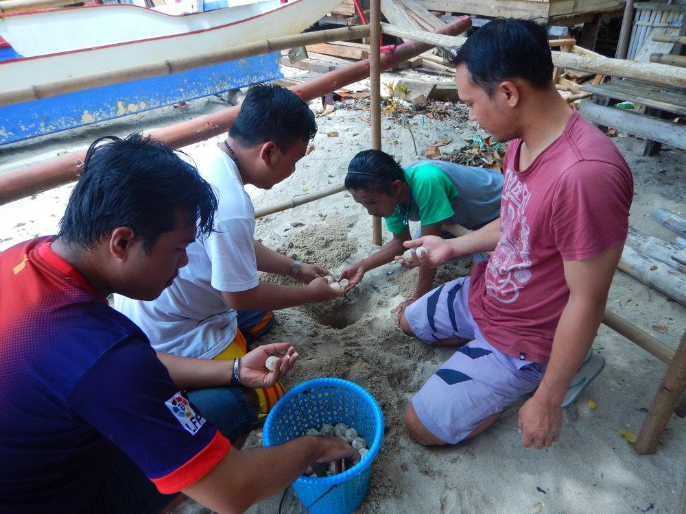 Manengkel_transfer turtle eggs to hatchery.JPG