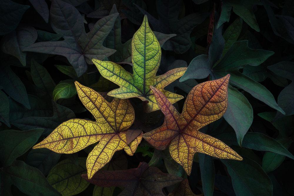 3-Leaves.jpg